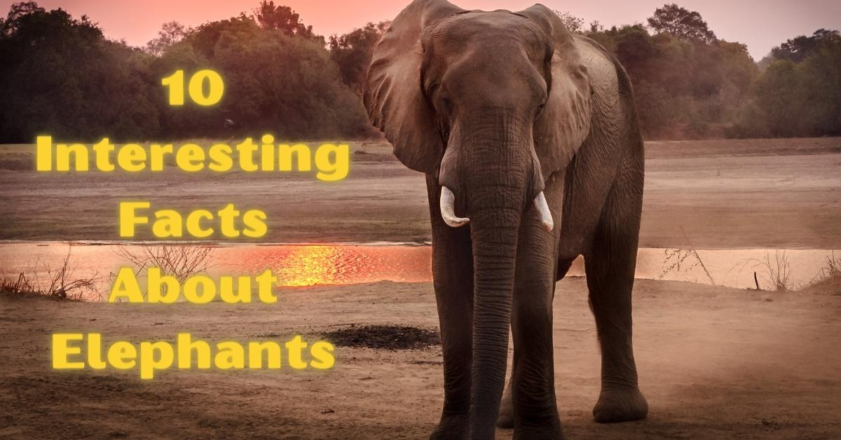 Top 10 Interesting Facts About Elephants